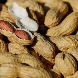 Balança comercial de amendoim in natura atinge US$ 70,8 milhões até abril