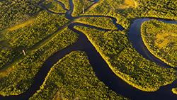 Consumo sustentável de produtos da Amazônia contribui na preservação ambiental