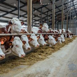 Valor da Produção Agropecuária pode chegar a um trilhão no ano
